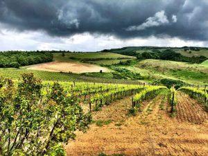 Italy_Montepulciano_wineries-in-montepulciano.jpg