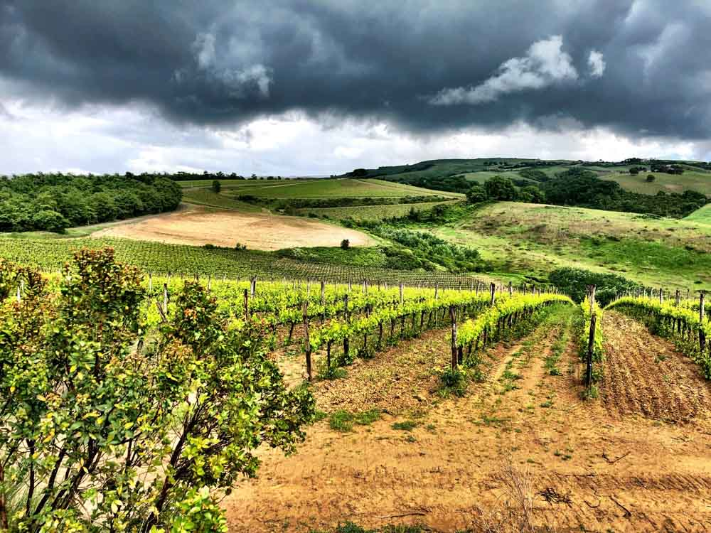 Wineries in Montepulciano: 12 You Can't Miss.