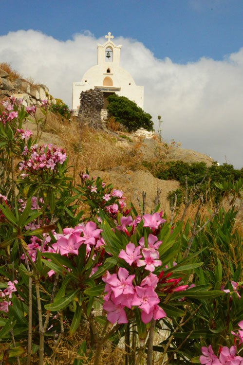 greece_ios_hora_church-pink-flowers