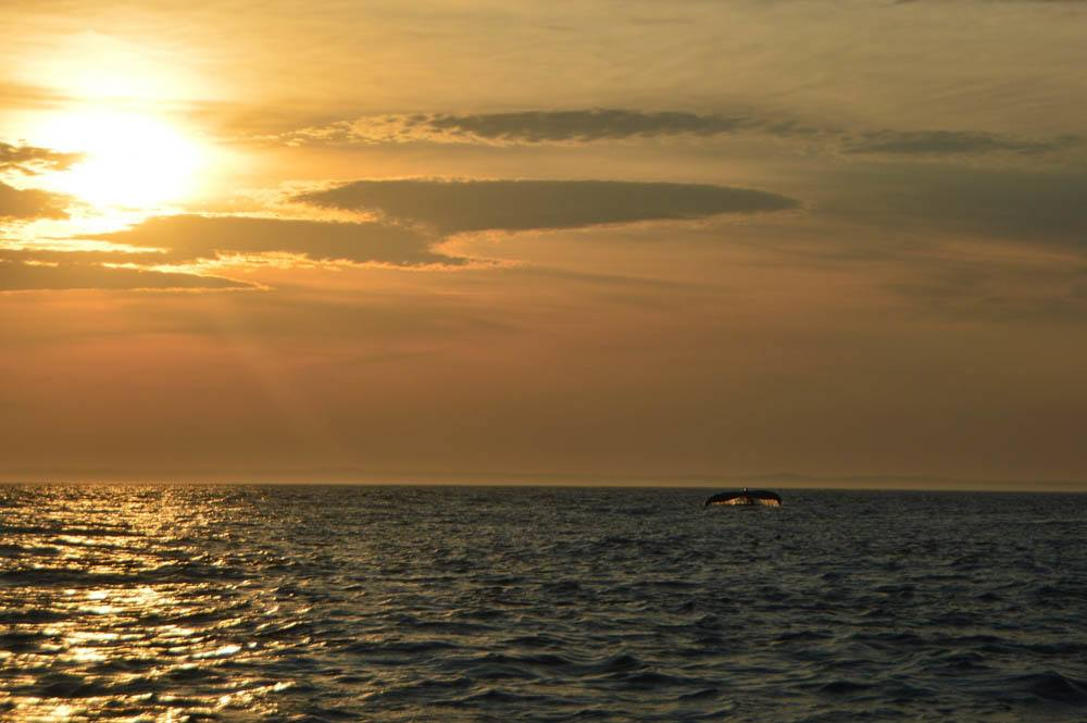 canada_new-brunswick_standrews-whale-watching-sunset-tail