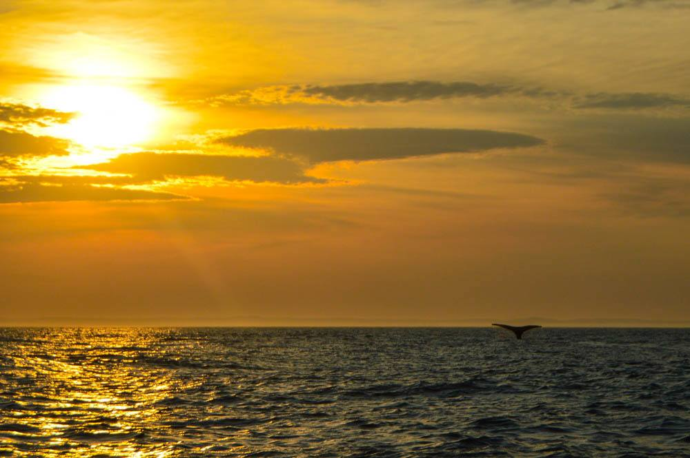 canada_new-brunswick_standrews-whale-watching-sunset-tail2