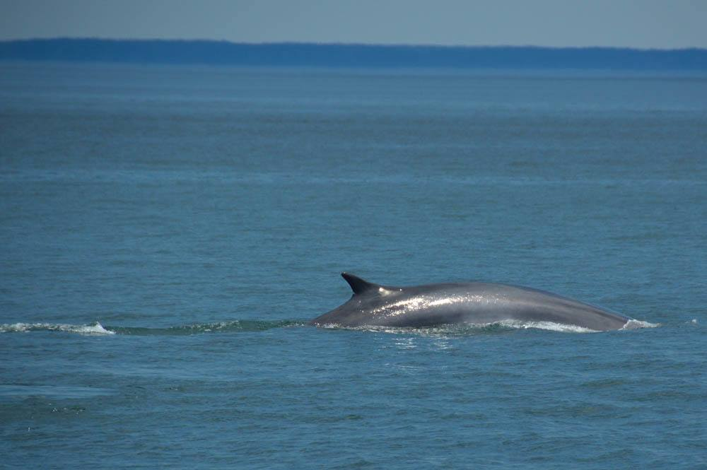 canada_new-brunswick_standrews-whale-watchin