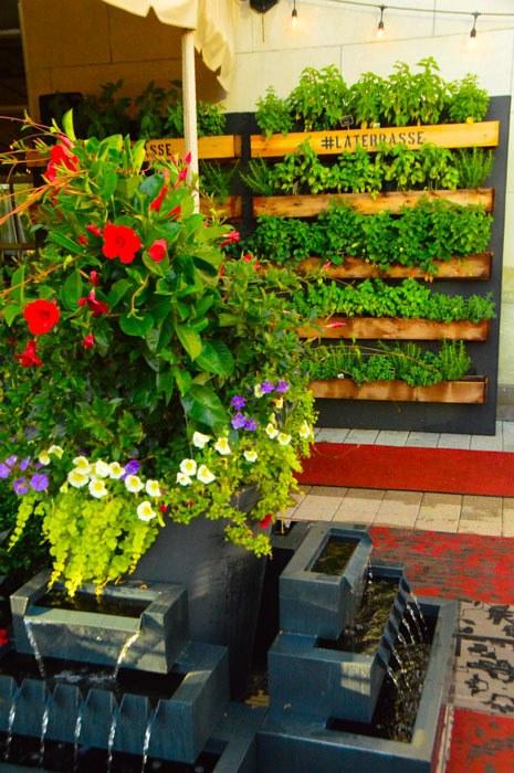 canada_ottawa_fairmont-laurier-la-terrasse-herbs