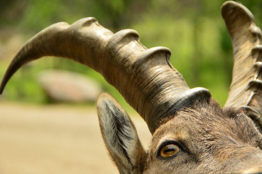 canada_ottawa_parc-omega-antlers