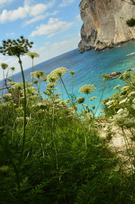 greece_paxos_erimitis-flowers