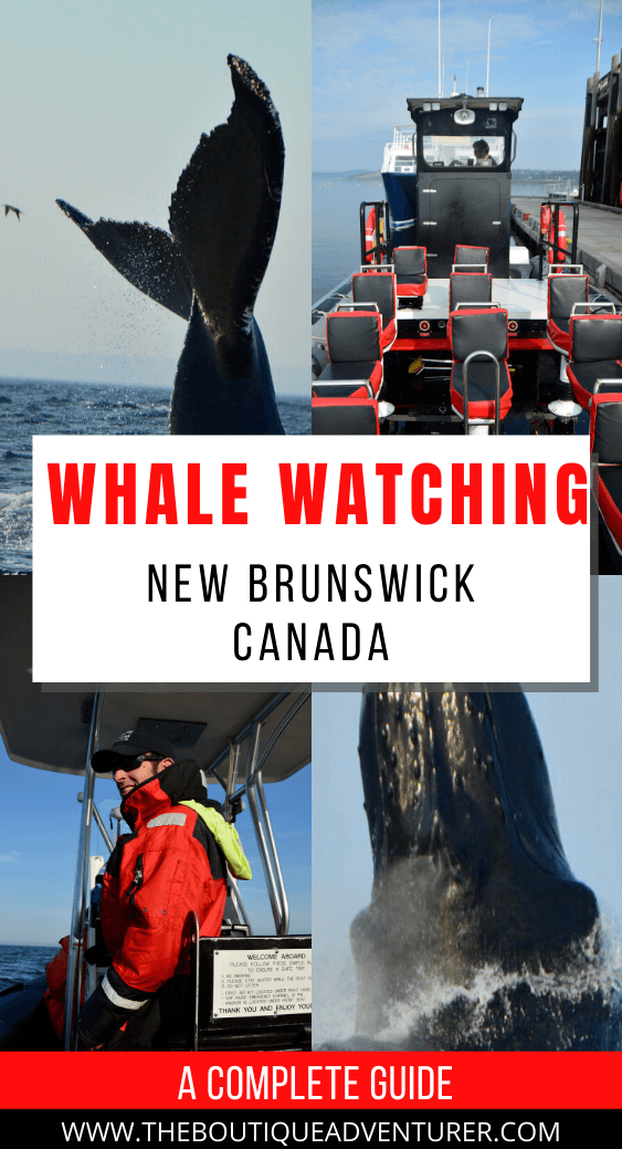New Brunswick in Canada is wonderful – from lobsters to the Acadian coast to the reversing rapids of St Johns to the brilliant whale watching in Saint Andrews. Here is my complete guide to Whale Watching in St Andrews New Brunswick #newbrunswickcanada