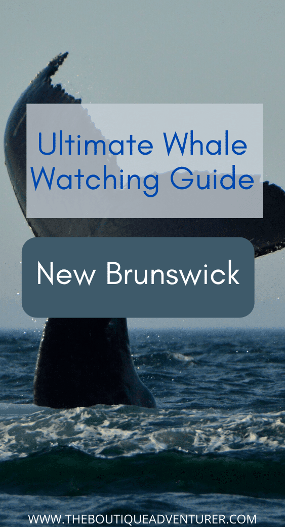 New Brunswick Canada is one of the best places to go whale watching. The Bay of Fundy and its famous tides produce brilliant whale sightings and Saint Andrews is one of the best places to take whale watching tours – find out more in my ultimate guide #whalewatchingnewbrunswick