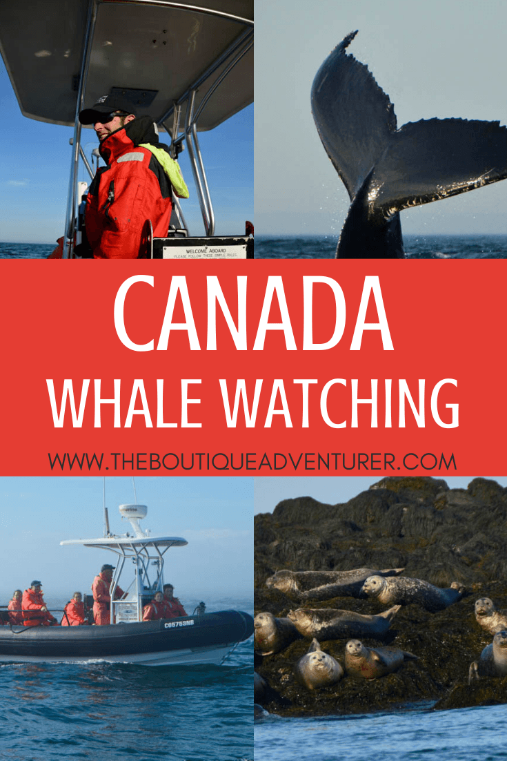 Heading to New Brunswick and keen to see some whales? Read my Whale Watching St Andrews how-to guide & increase your chances of seeing Whales in the Wild!