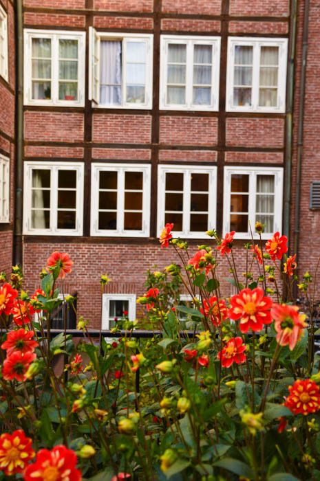 germany_hamburg_red-bricks-flowers