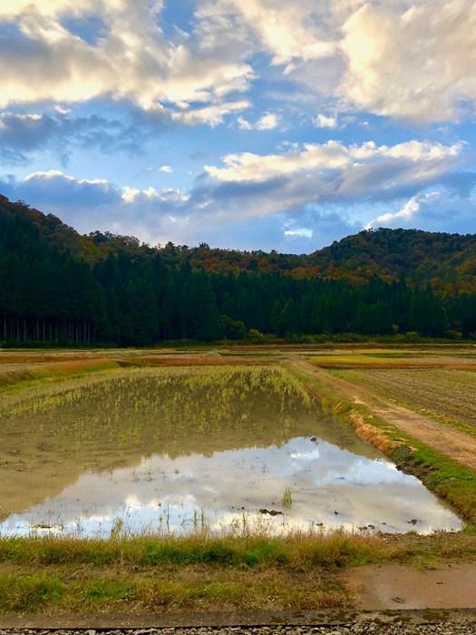 japan_kaga_noguchi-sake-fields