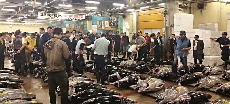 Japan_Tokyo_fish-market