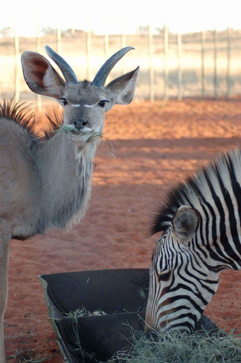 Namibia_sossusvlei-oryx-and-zebra