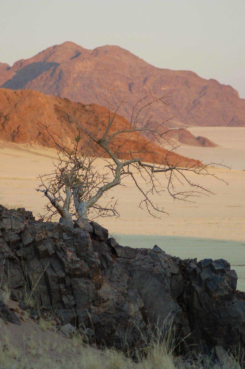 Namibia_sossusvlei-tree