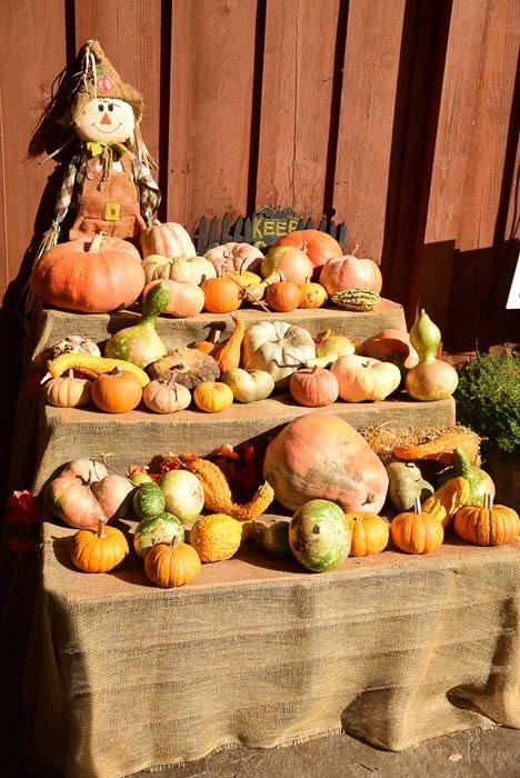 california_sonora_indigeny-festival-squash-pumpkins