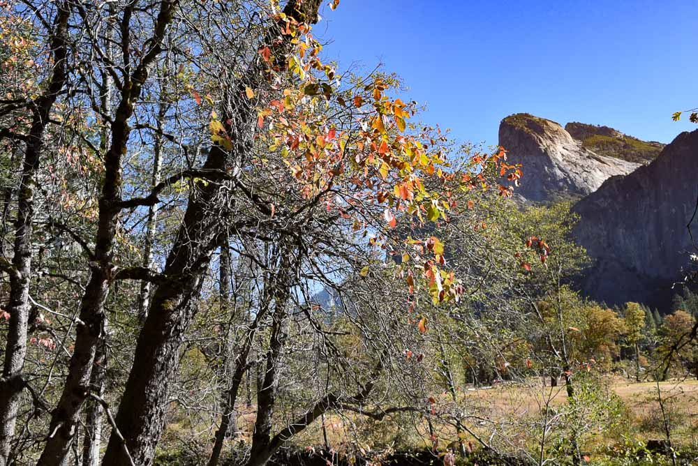california_yosemite_autumn-leaves-mountain-2