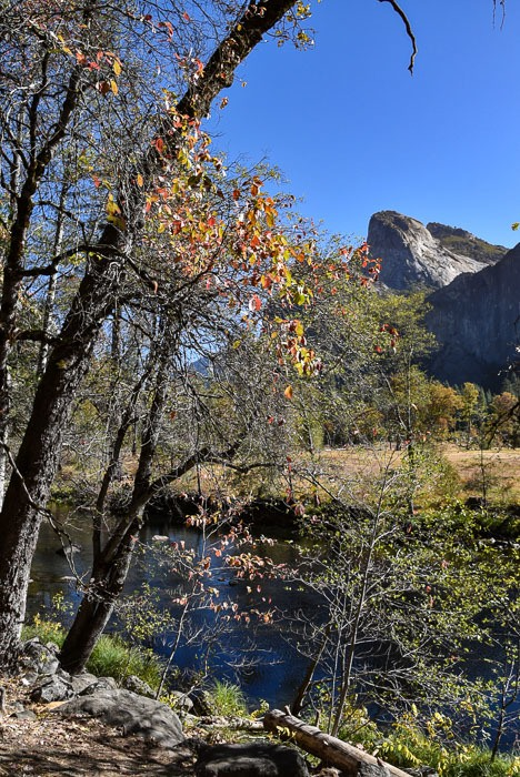 california_yosemite_autumn-leaves-mountain