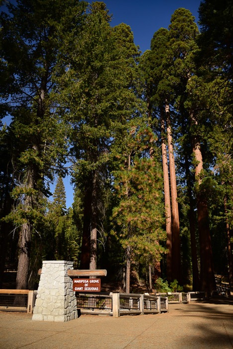 california_yosemite_mariposa-grove-1