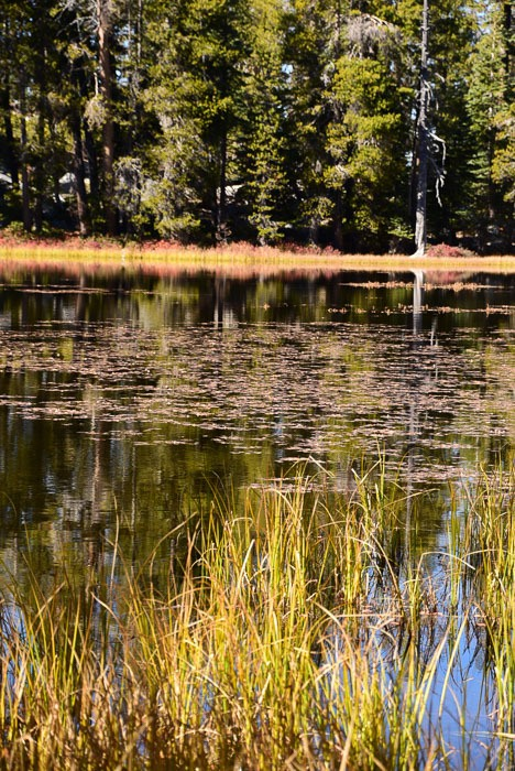 california_yosemite_siesta-lake-2