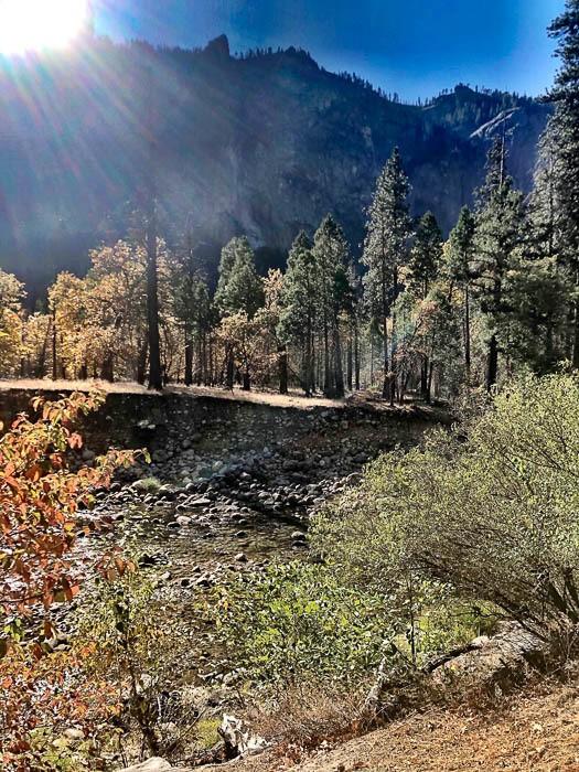 california_yosemite_trees-9