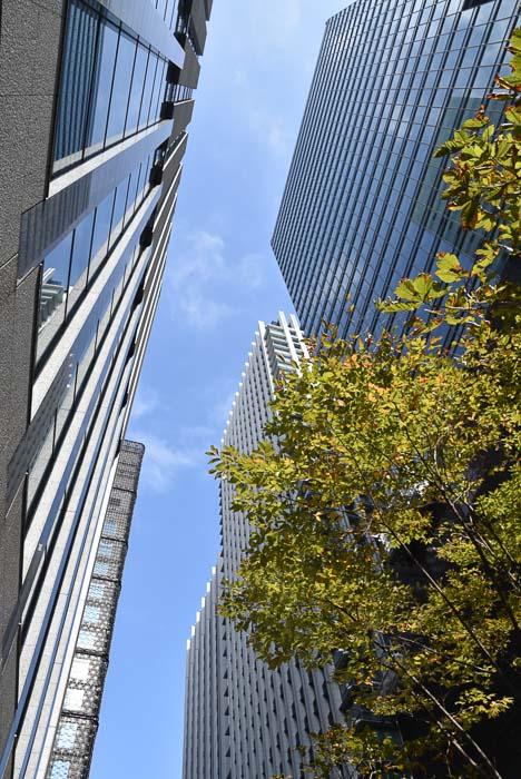 japan_tokyo-modern-buildings-trees
