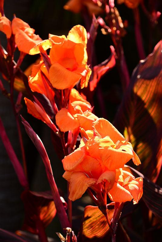 Australia_sydney_botanic-garden-flower