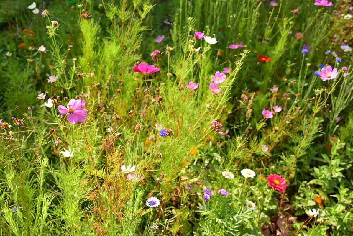 Australia_sydney_botanic-garden-flowers