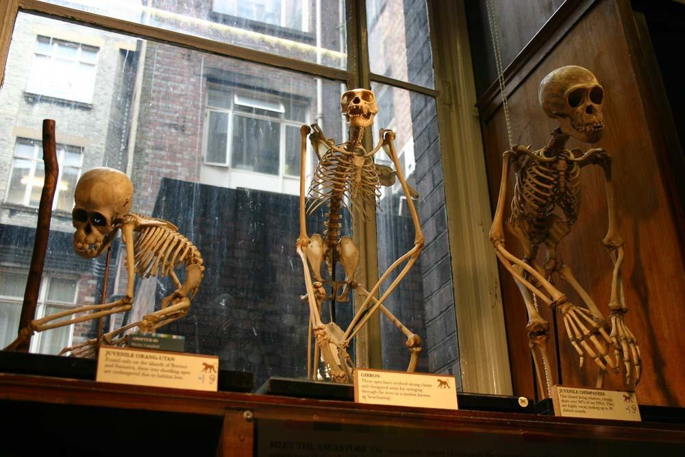 Skeletons in the Grant Museum