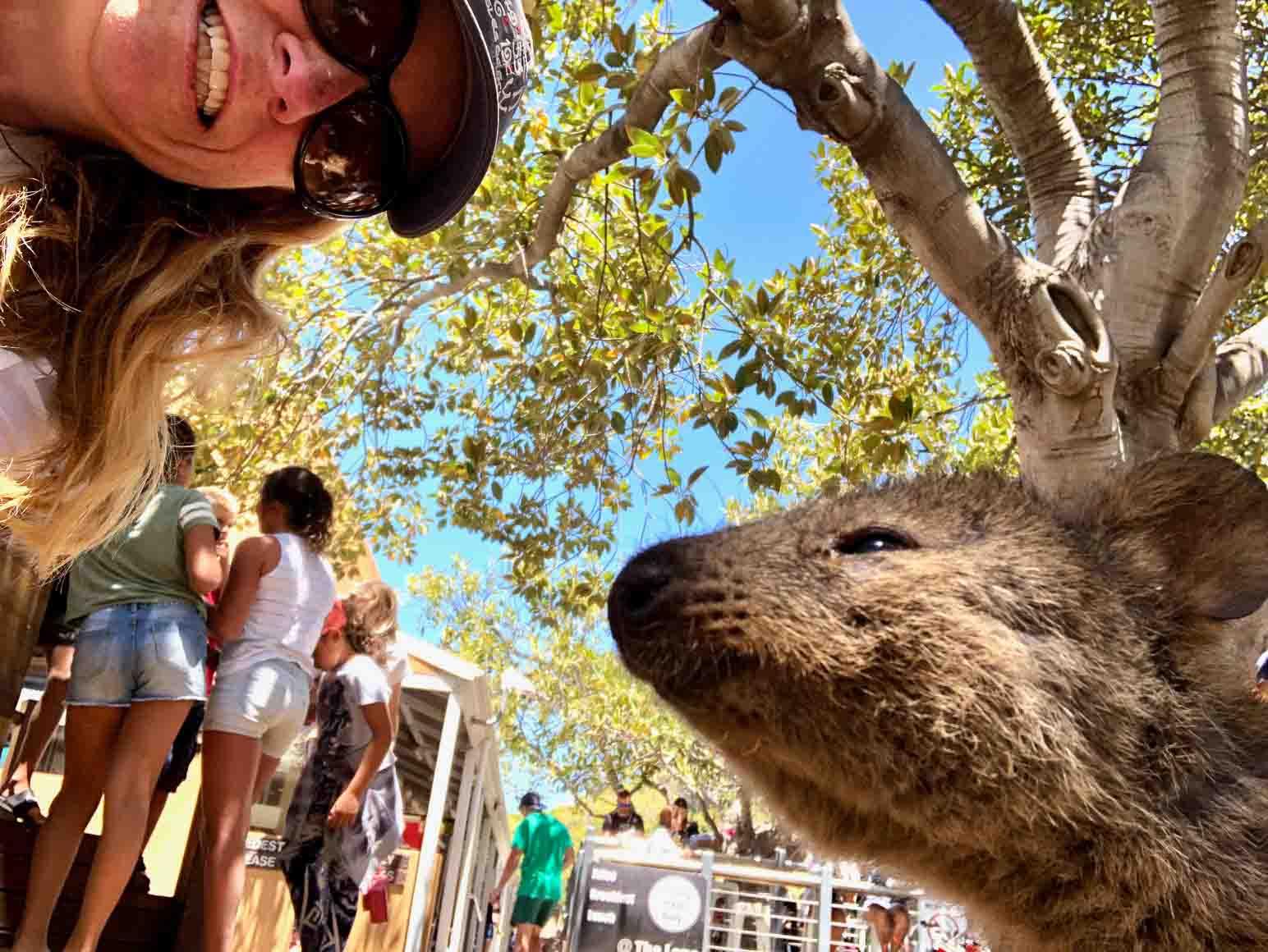 Perth_rottnest_island_quokka-selfie