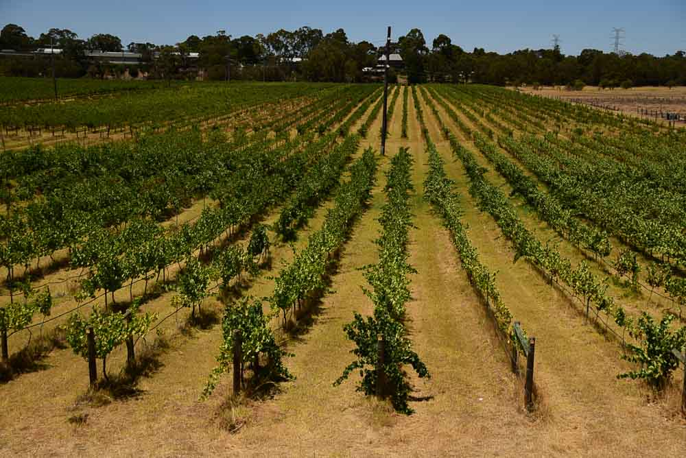 perth-swan-valley-vineyards