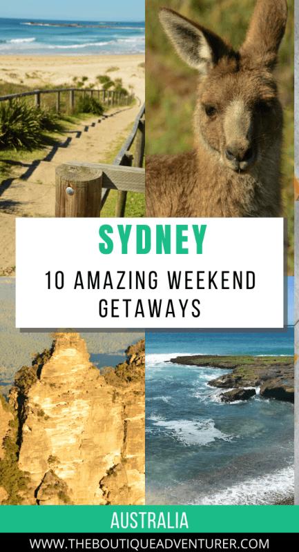 kangaroo, steps to a beach, three sisters rock formation blue mountains and sea near sydney australia