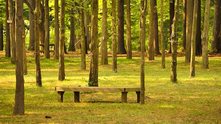 namiseom-island-bench in forest korea