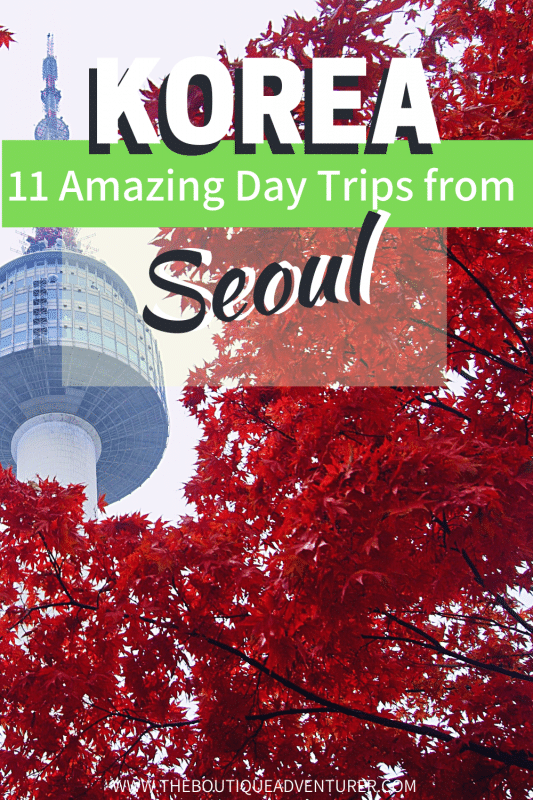 red leaves on a tree with seoul tower in the bckground korea