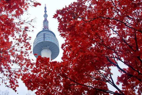 seoul tower through trees with red leaves