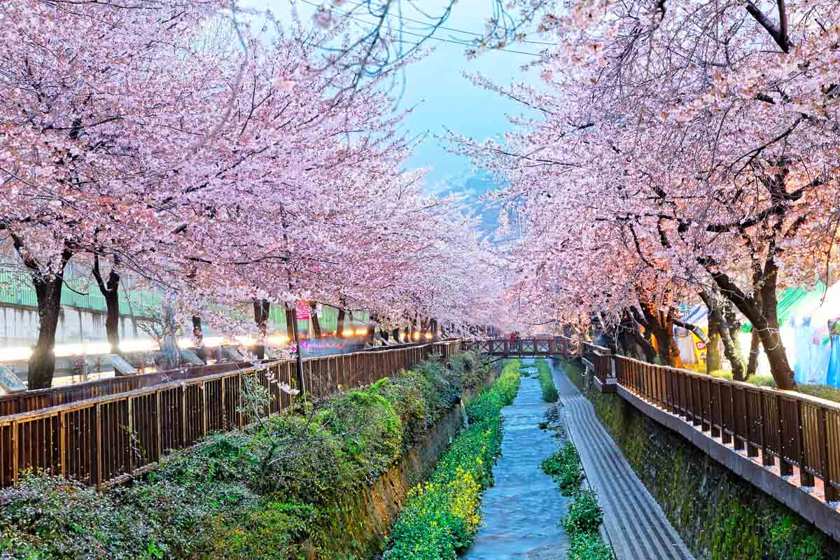 South Korea Travel Highlights Not to Miss - cover