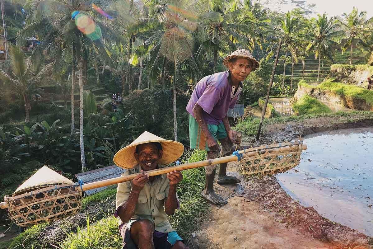 Men in rice fields Indonesia Bali Ubud