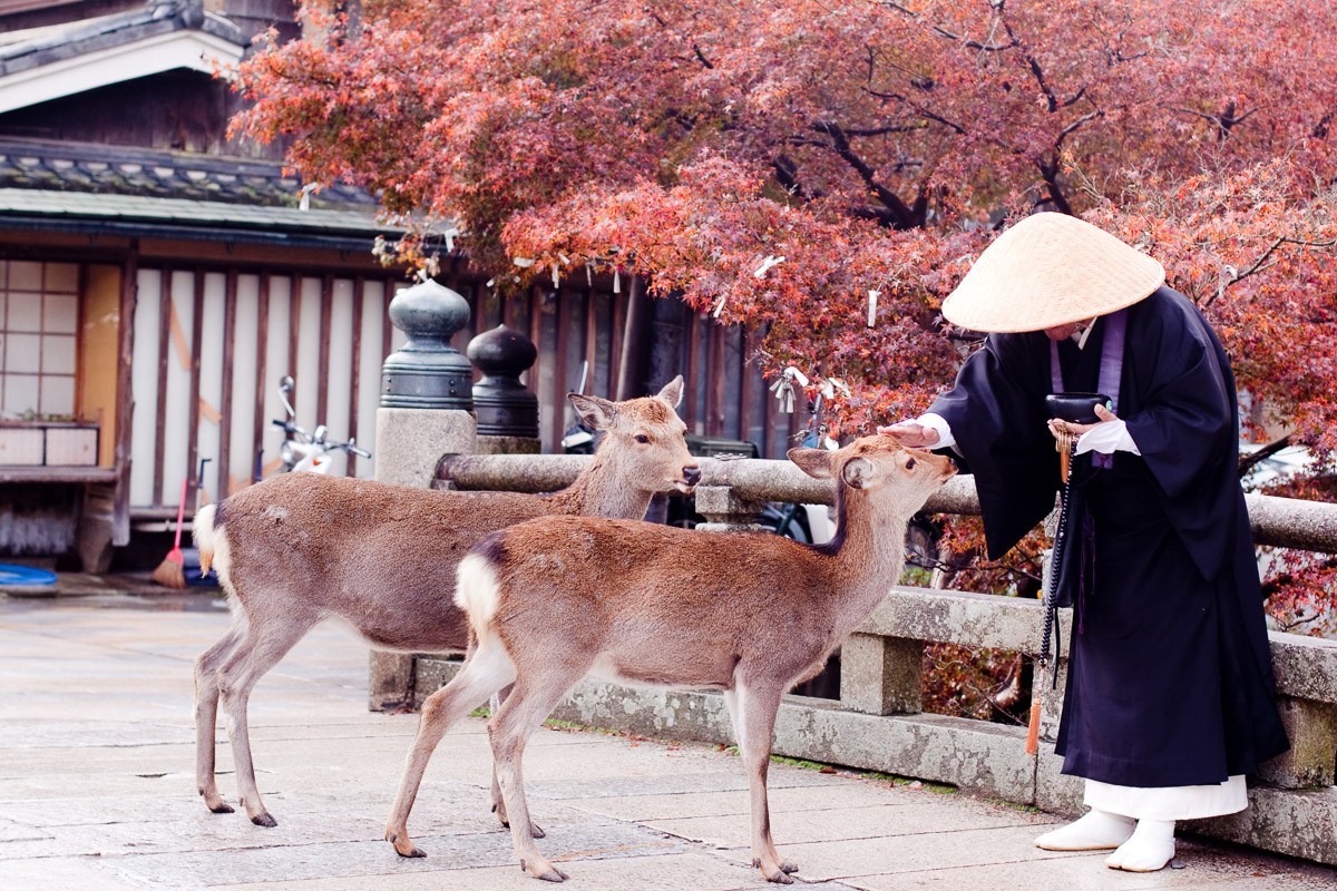 A buddhist monk and two deers in an autumn park
