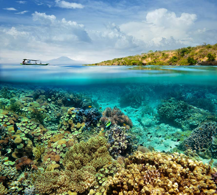 Coral reef on the island of Menjangan