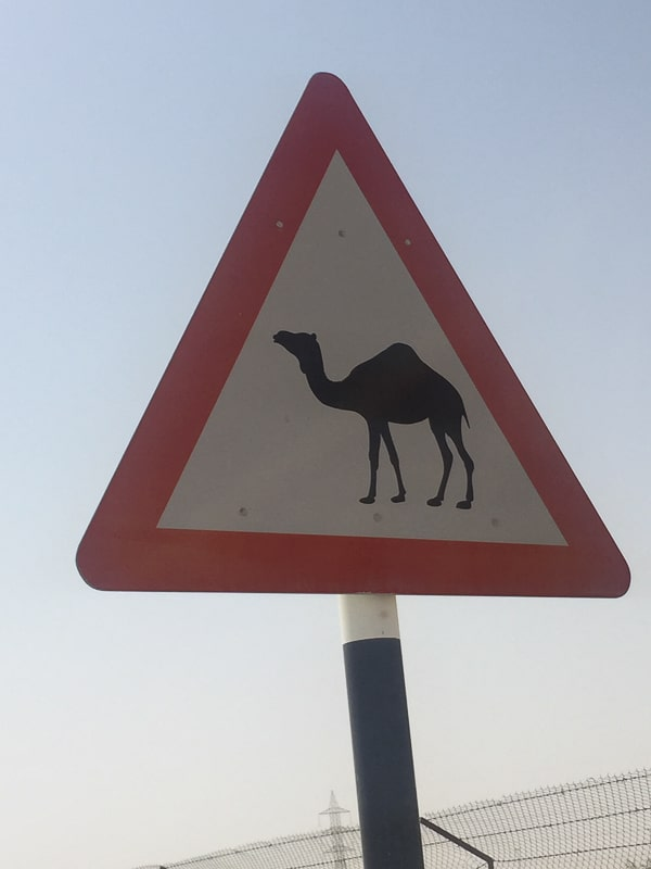 camel crossing street sign