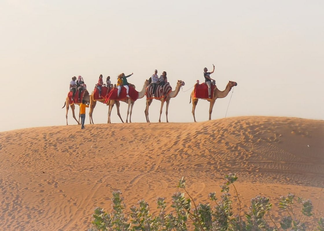 camels with people riding them on top of a dune