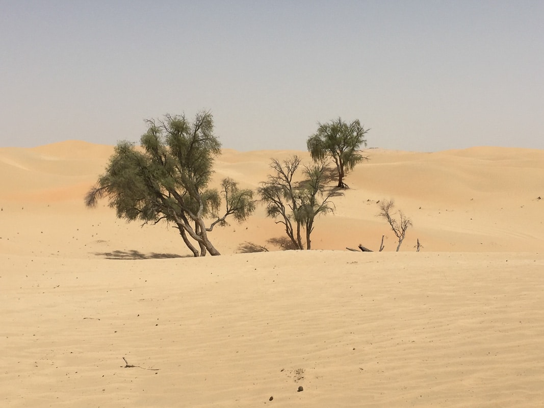 desert plain with some trees