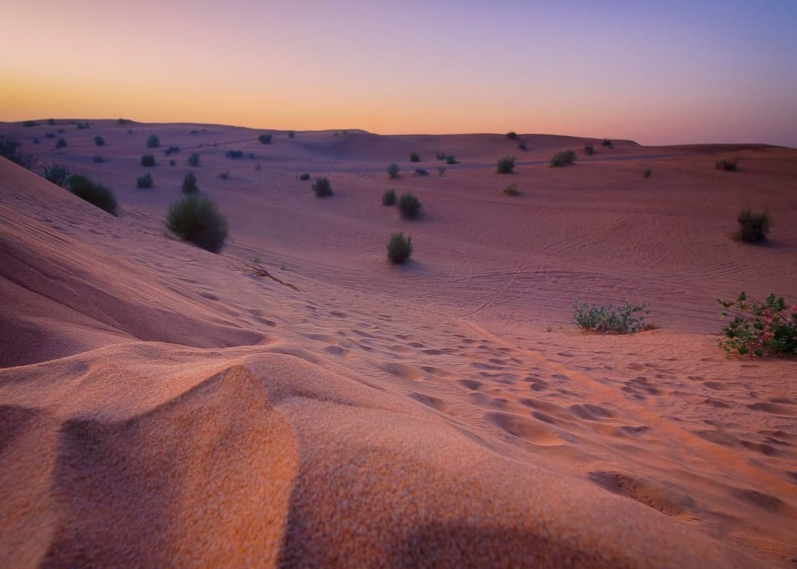 sand dunes with some grass up close at sunrise