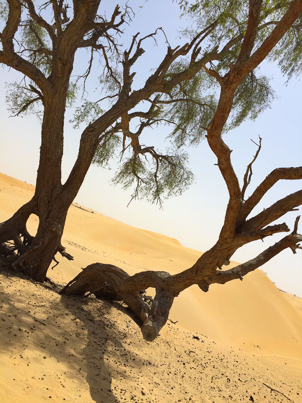 trees in desert
