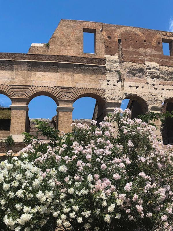 Rome Colosseum white flowers