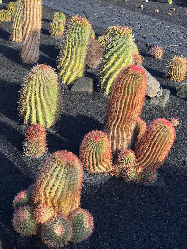 Lanzarote cactus garden cacti up close