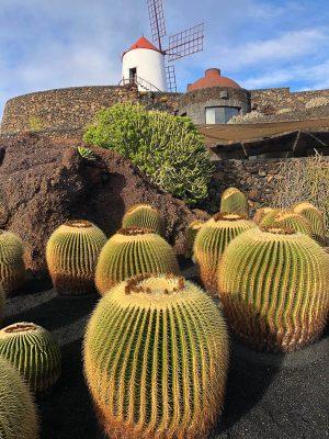 Lanzarote cactus garden with close up cactus 2