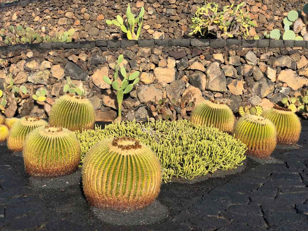 Lanzarote cactus garden with close up cactus