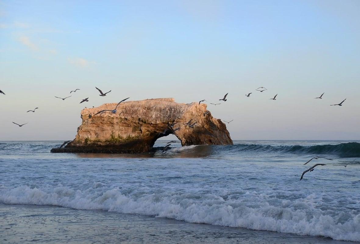 Natural_Bridges_State_Beach_Santa_Cruz