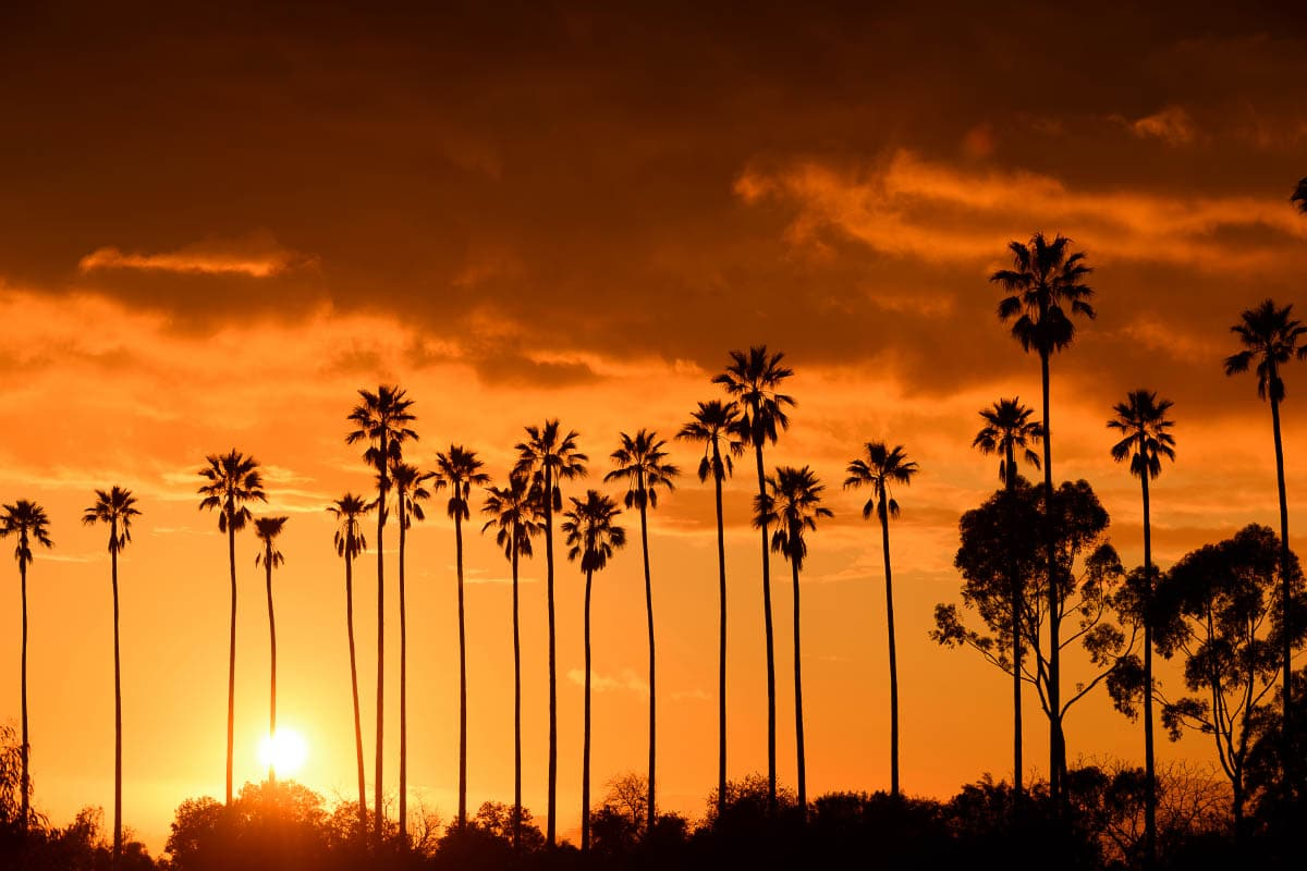 california sunset with trees