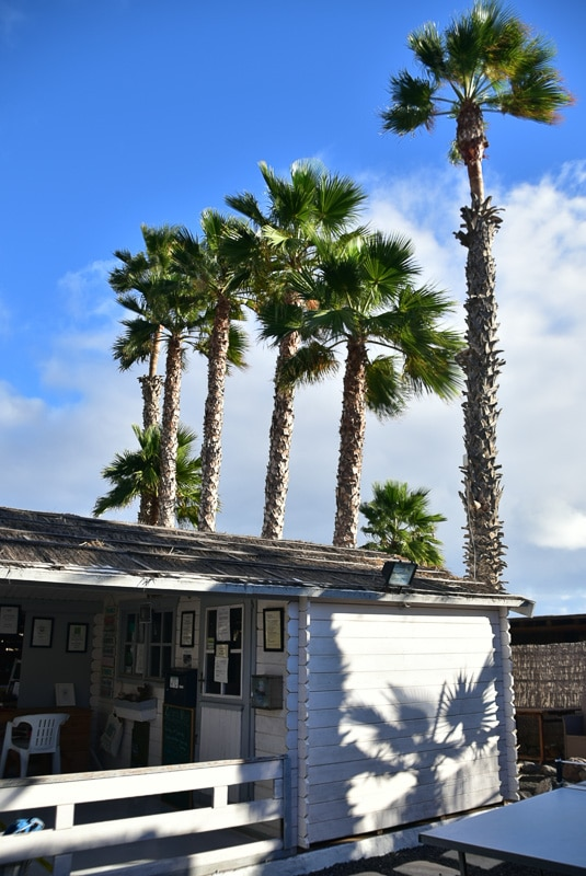 lanzarote eco finca de arrieta palm trees and office