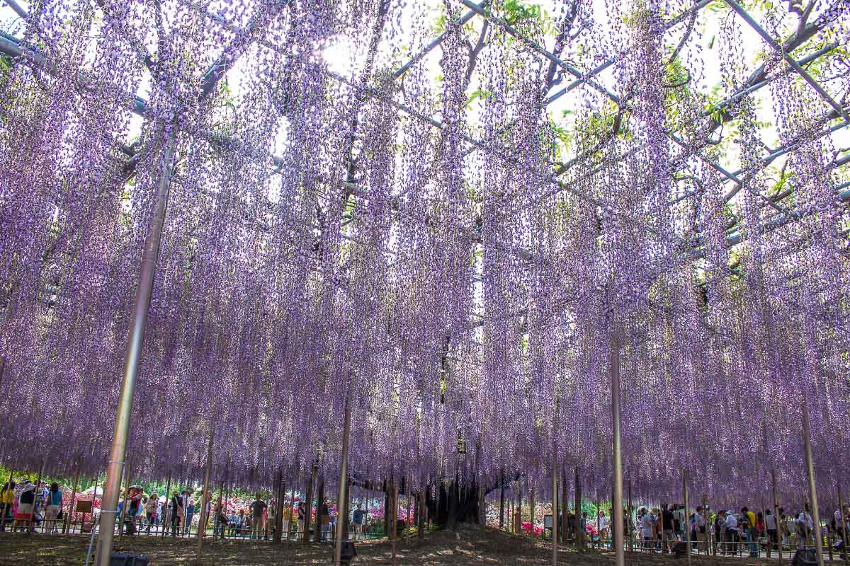 Ashikaga Flower Park japan